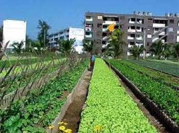 Agricultura urbana y Suburbana en Camagüey exhibe avances